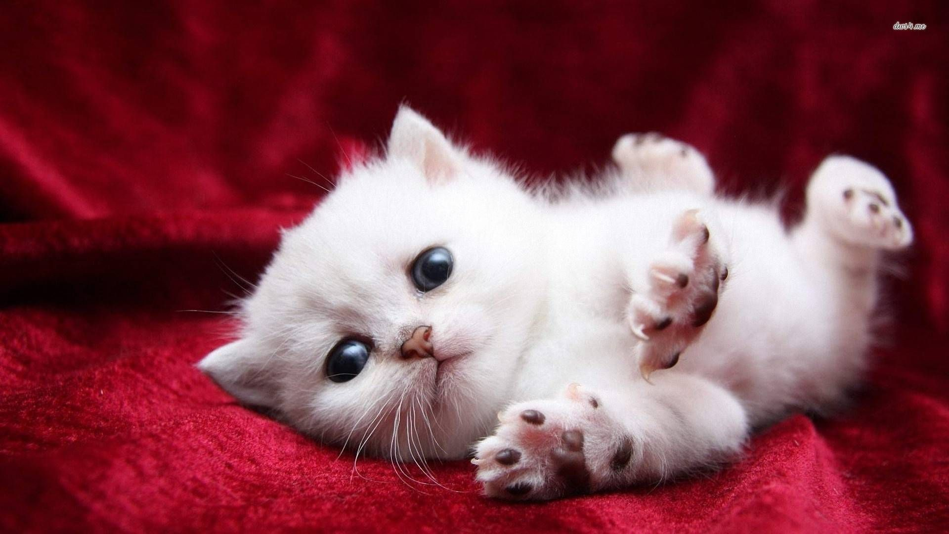 I Love This Kittens Cutest Kitten Wallpaper Cute Cats And