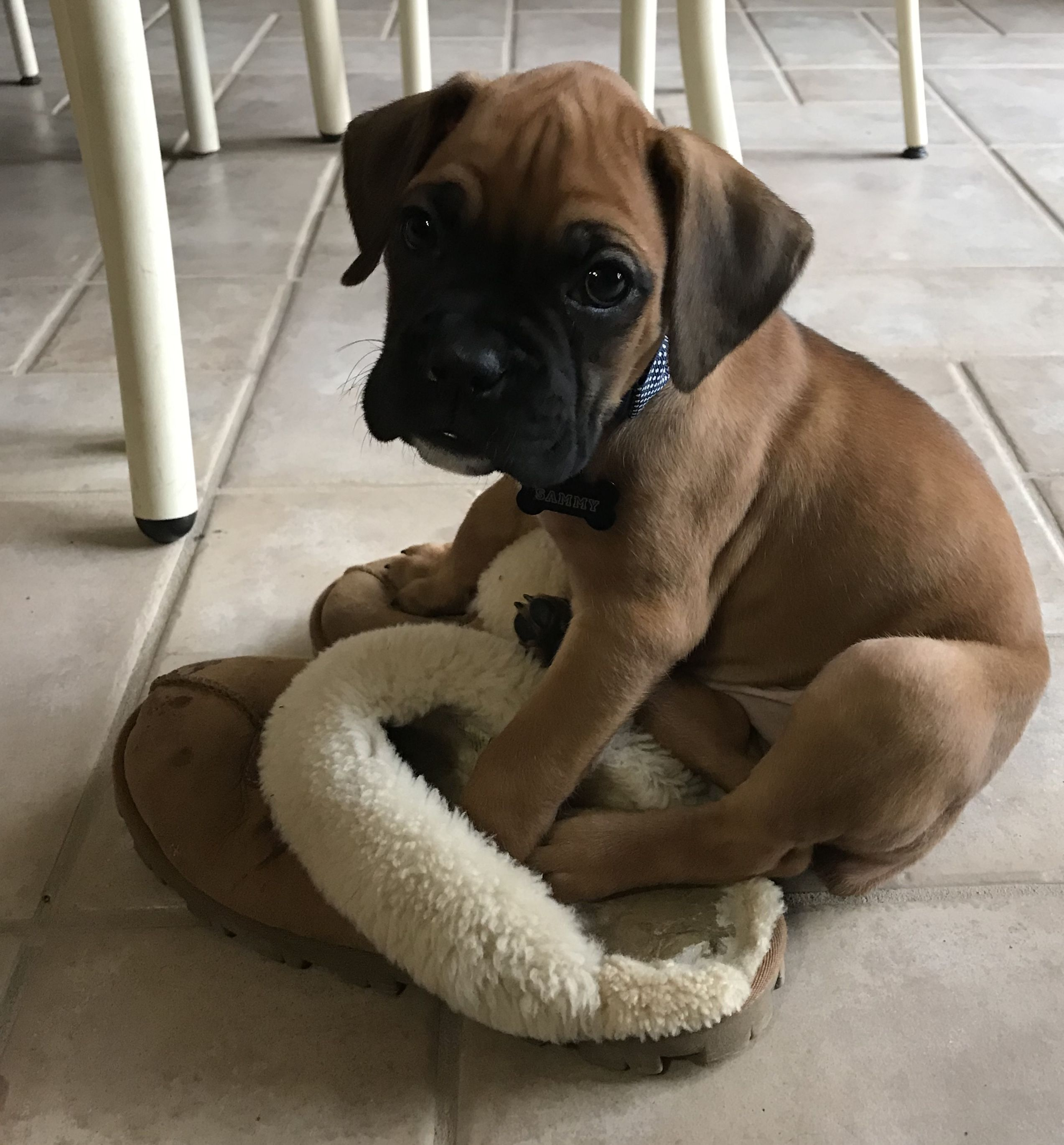 Mama S Slippers Boxer Puppies Boxer Dogs Funny Female Boxer Dog