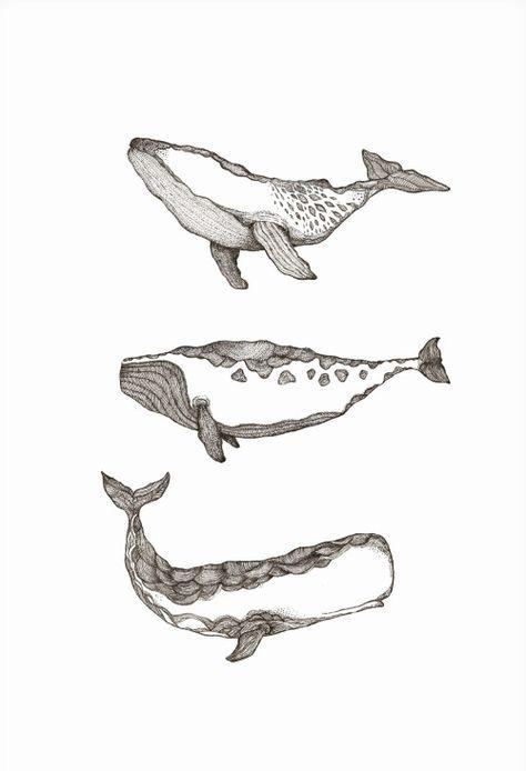 Baleines Art In 2018