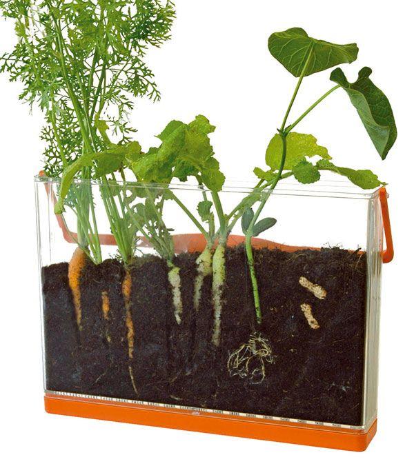 visio nature un kit pour observer la pousse des plantes et d couvrir le cycle de vie des. Black Bedroom Furniture Sets. Home Design Ideas