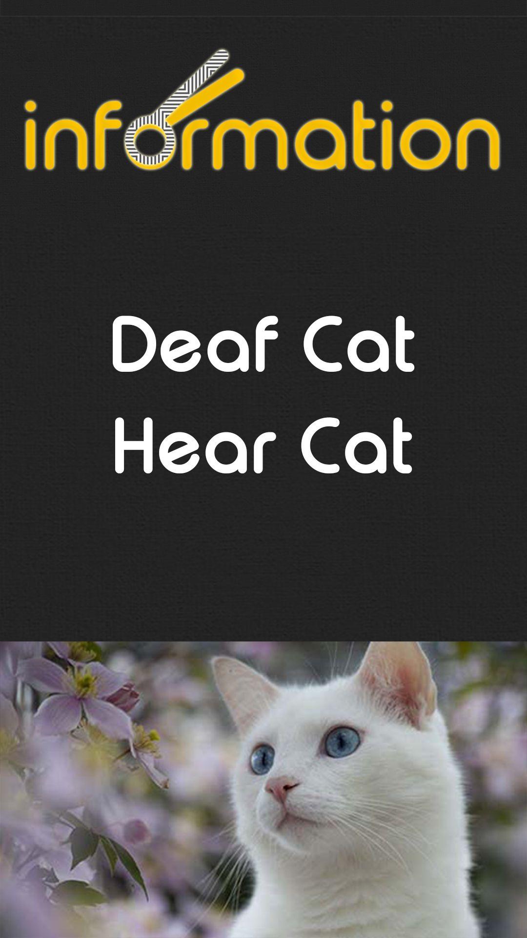 Deaf Cat Hear Cat In 2020 Hear Cat Cats Deaf