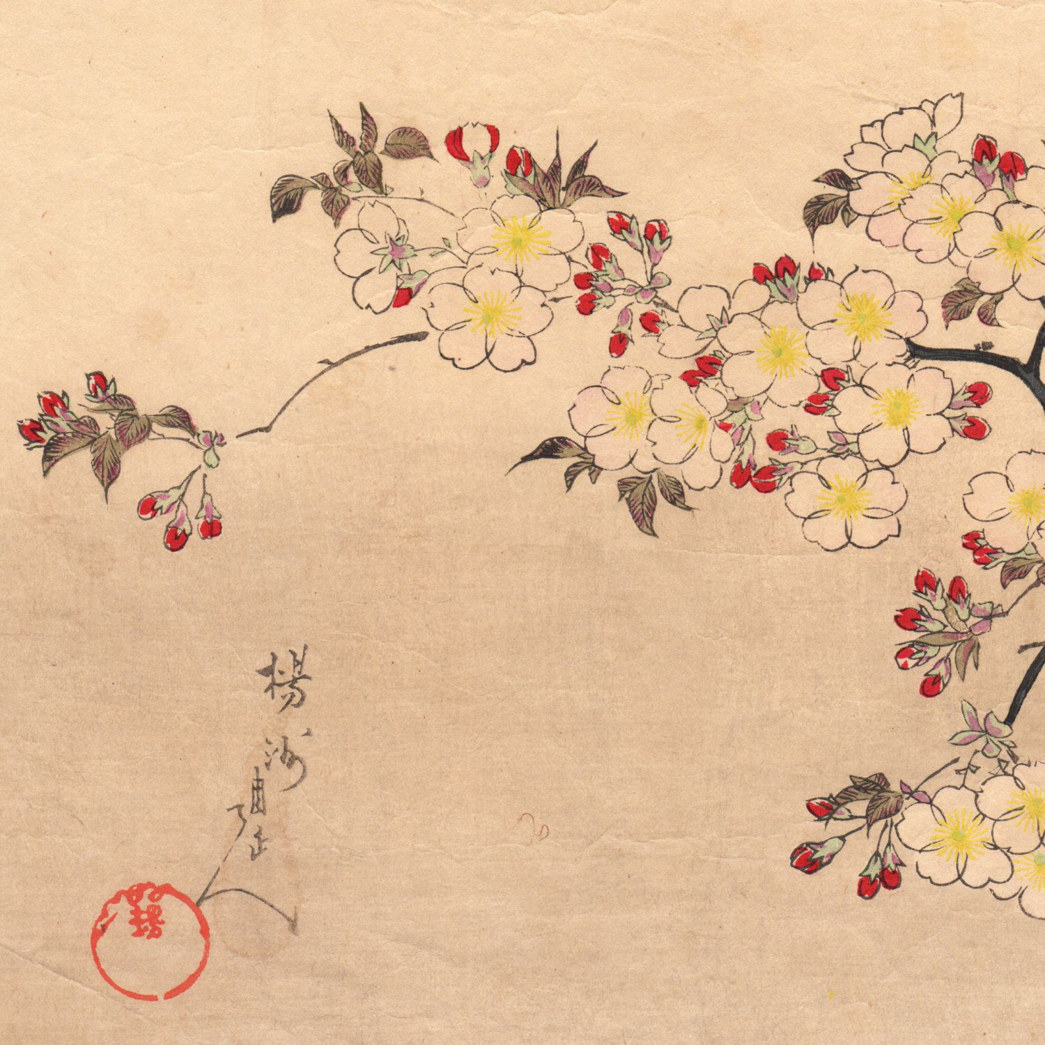 Images For Japanese Woodblock Prints Cherry Blossom