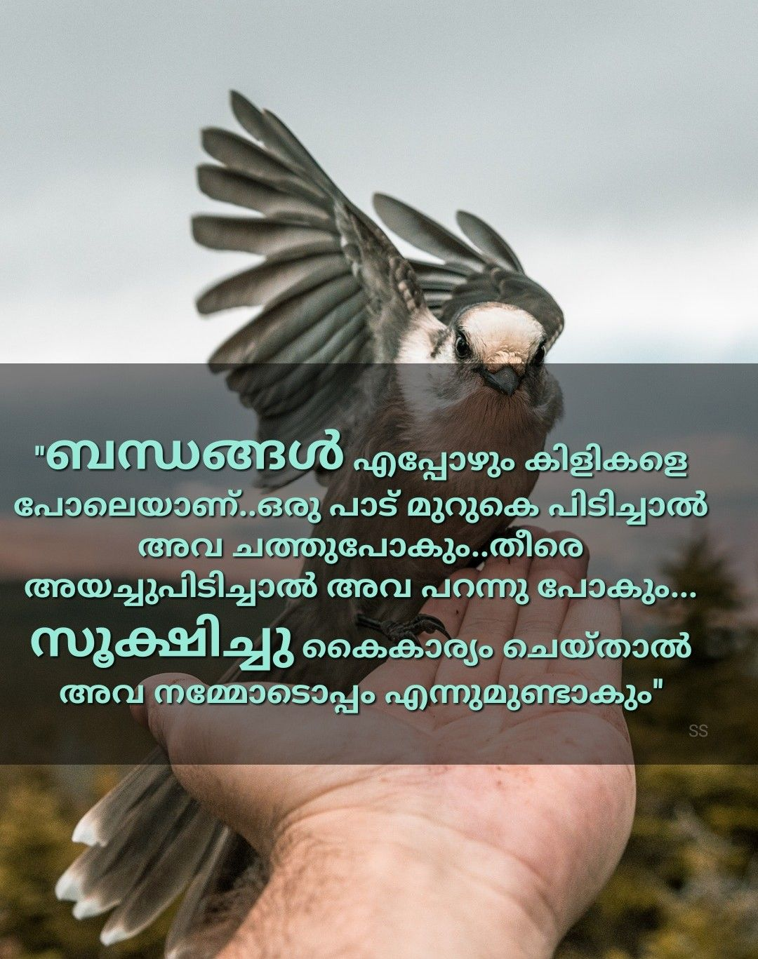 Pin By Grace Ann On Kadalas Malayalam Quotes Heartfelt Quotes People Quotes