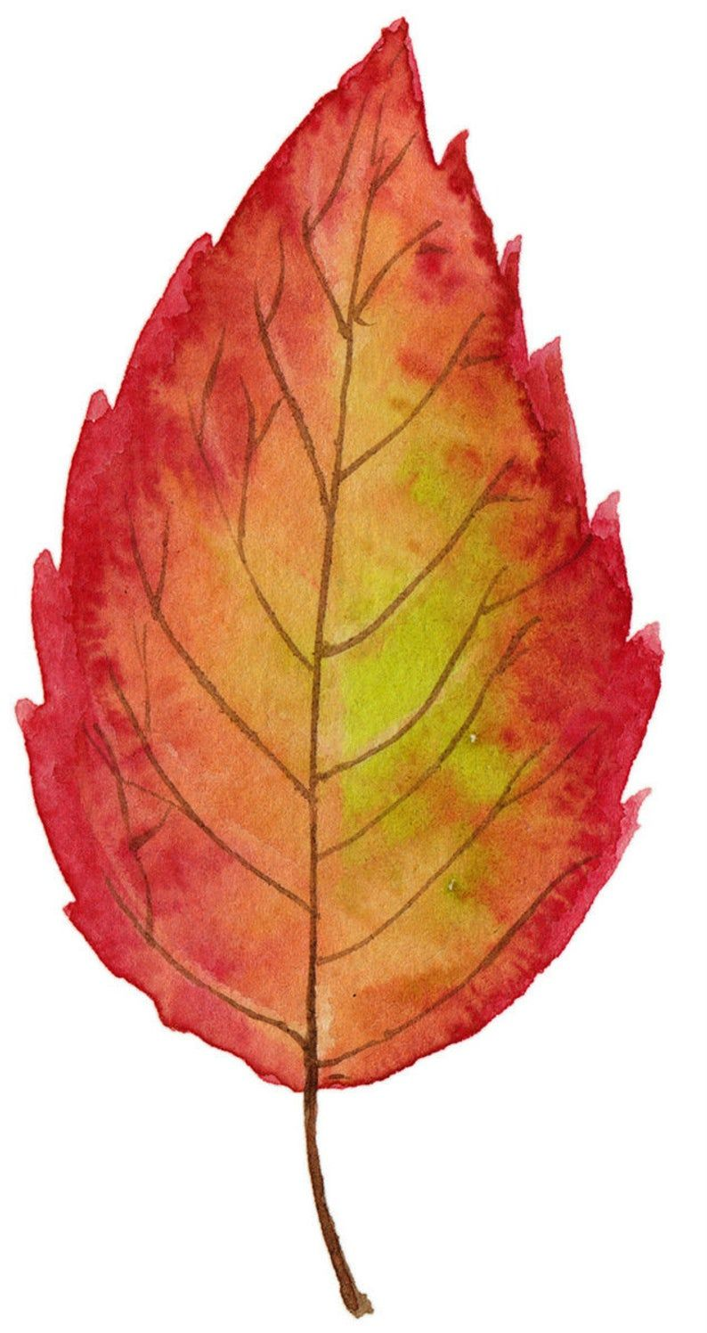 Watercolor Fall Leaves Clipart | Bright Autumn Leaves ...