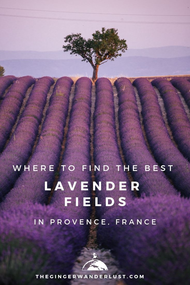 Where To Find Best Most Instagrammable Lavender Fields In Provence Lavender Fields France Lavender Fields Provence Lavender Fields