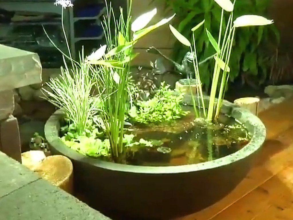 hidroponia para decorar mini jardín con plantas acuáticas