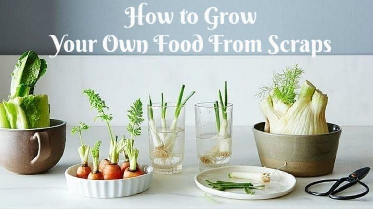 Grow your own food from scraps howto redheaded patti