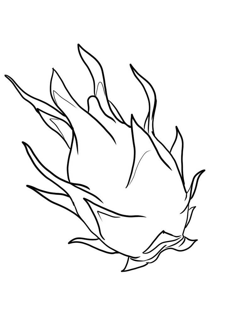 Dragon Fruit Coloring Pages Sketches Dragon