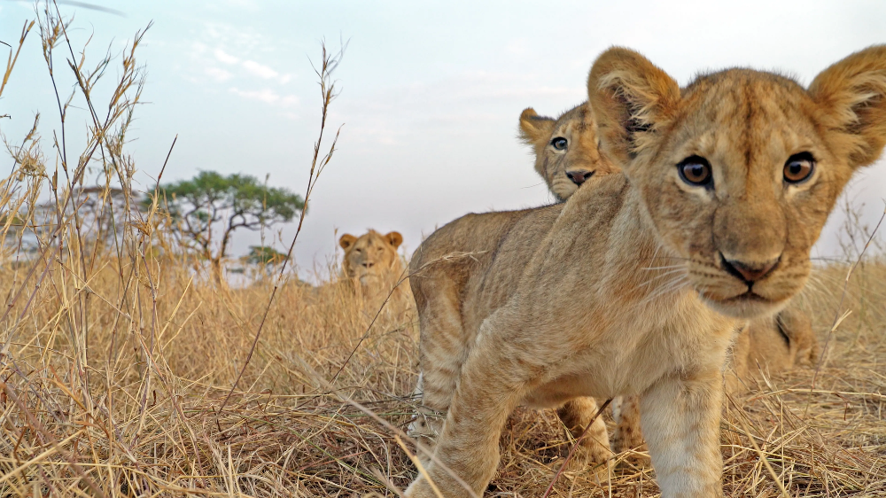 Stunning shots of the Serengeti wildlife from Discovery's