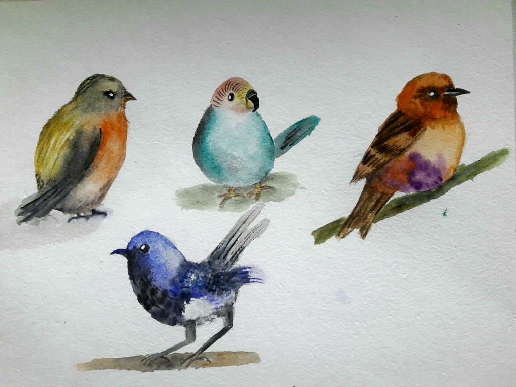 Watercolour Birds Bird Drawings Watercolor Bird Beautiful