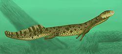 Vancleavea campi, Late Triassic (228 – 203.6 Ma), Reptilia (archosauriform), Discovered by Long & Murry - 1995