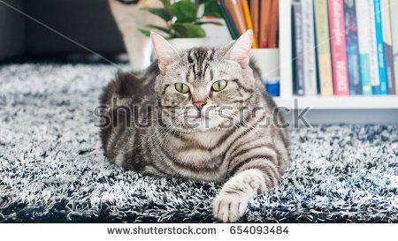 ป กพ นในบอร ด My Shutterstock Com Portfolio