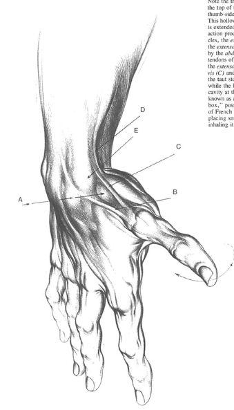 Burne Hogarth Drawing Dynamic Hands 25 Anatomy Sketches