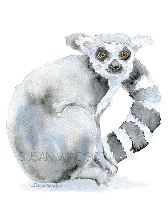 Lemur Watercolor Painting  11 x 14  Giclee Reproduction | Etsy