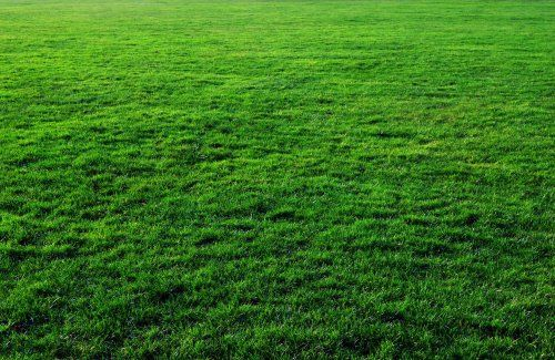 Seven Free Grass Textures Or Lawn Background Images Grass Background