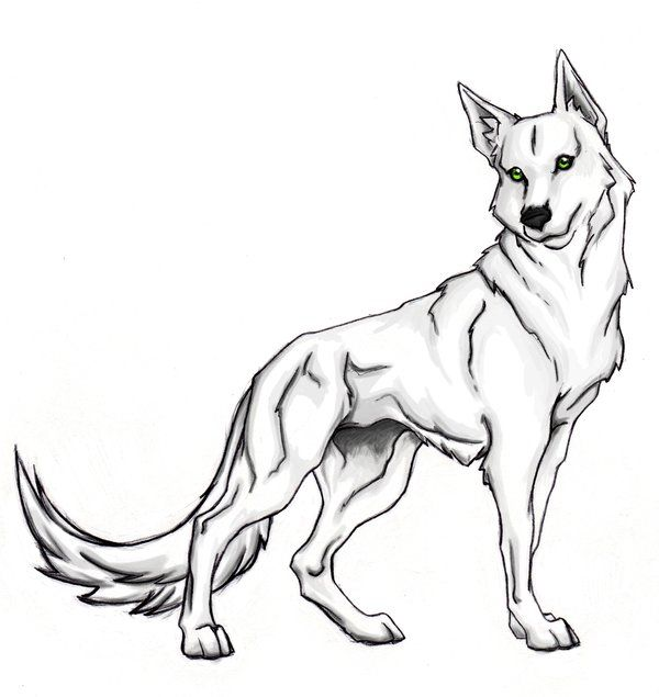 Pin By Lindsay Osborn On Drawings Wolf Colors Animal Coloring Pages Puppy Coloring Pages