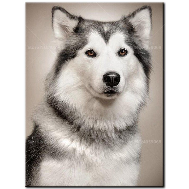 One Of The Oldest Of The Northern Sled Dogs The Alaskan Malamute
