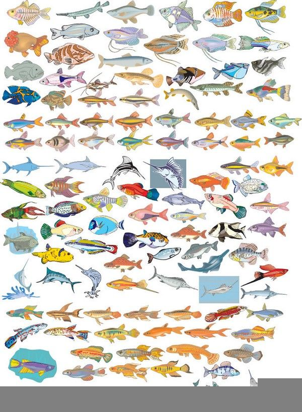 Fish Vector Eps Free Download Logo Icons Clipart Fish Icon Fish Vector Icon Collection