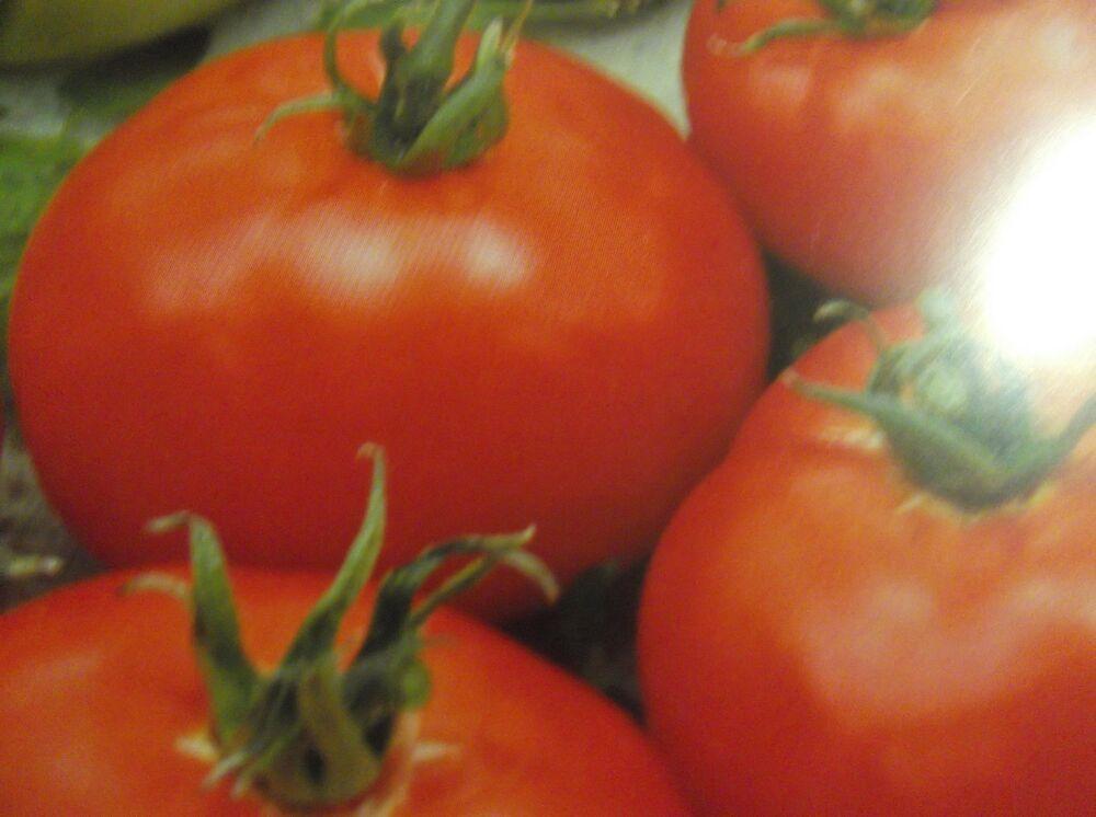 Moneymaker  Tomaten Samen,  Tomaten pflanze ,Sämereien , ,P.90 #tomatenpflanzen
