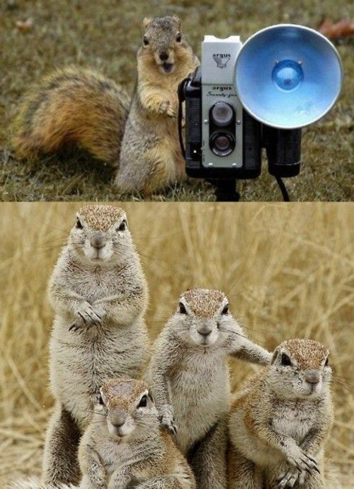 Squirrel family picture ~ We all need memories to look back on ~ My how the kids have grown!