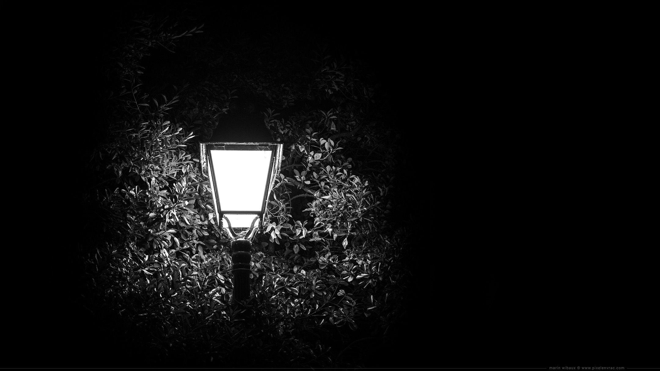Wallpaper Fond D Ecran Photo Noir Et Blanc D Un Reverbere De Nuit Dans Les Branches D Un Arbre Wallpaper Fond Ecran Noir Ecran Noir Et Blanc Fond Ecran