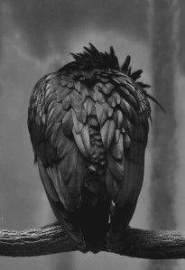 Owl Wigs: El lugar donde está mi camino.