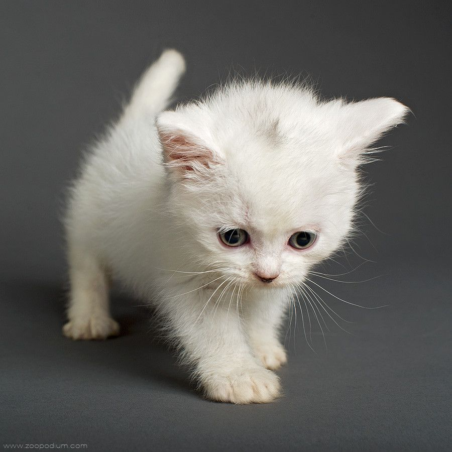 So Cute I Love The Face U Want The Cat Cute Baby Animals Cute Animal Pictures Cute Animals