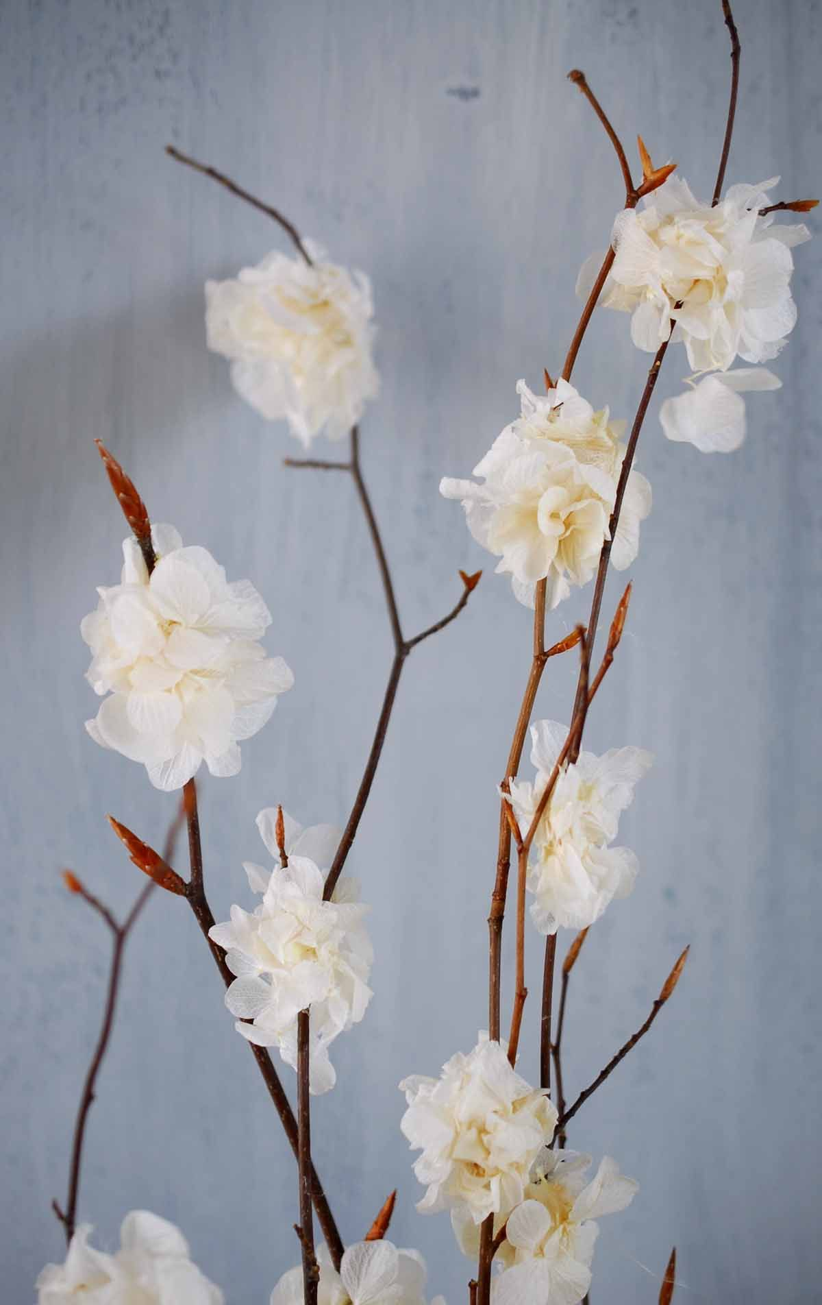 Natural Beech Branches with Preserved White Hydrangeas