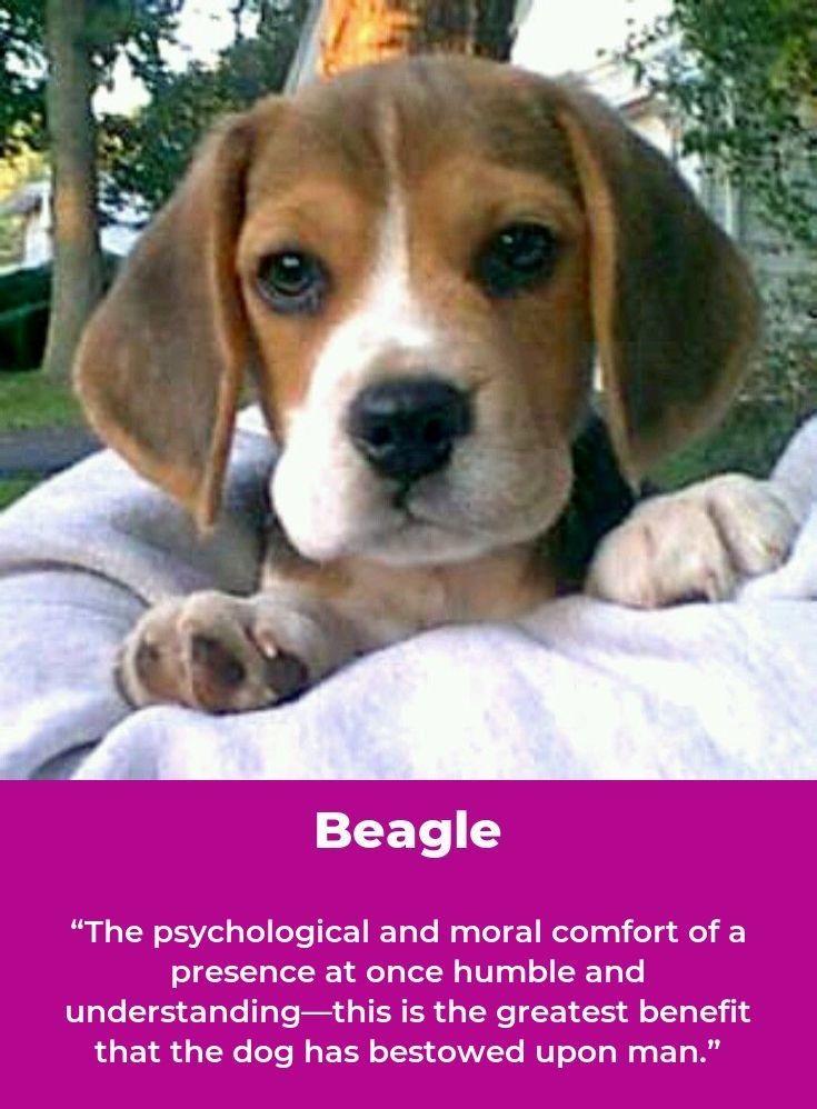 Beagle Beaglefun Beagles Names I Love Dogs Beagle Names