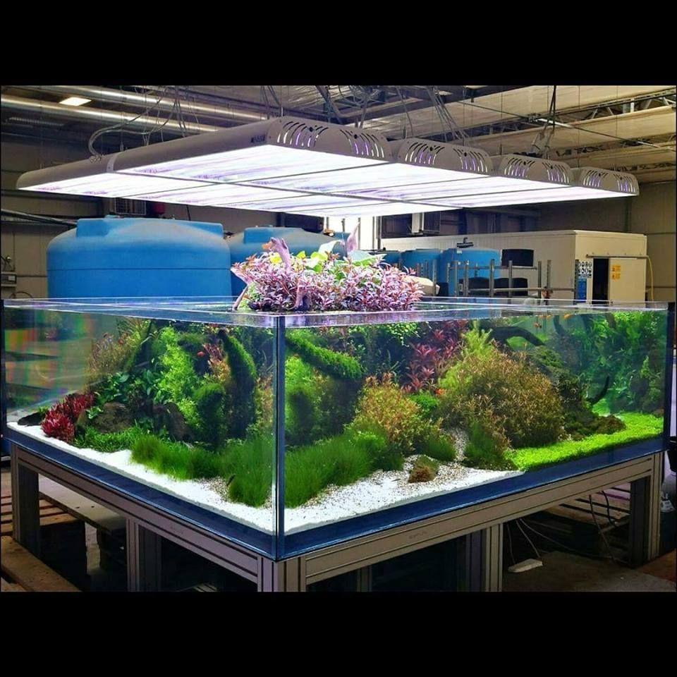 Aquarium Care Tips for Saltwater Fish | Aquarium fish, Big ...