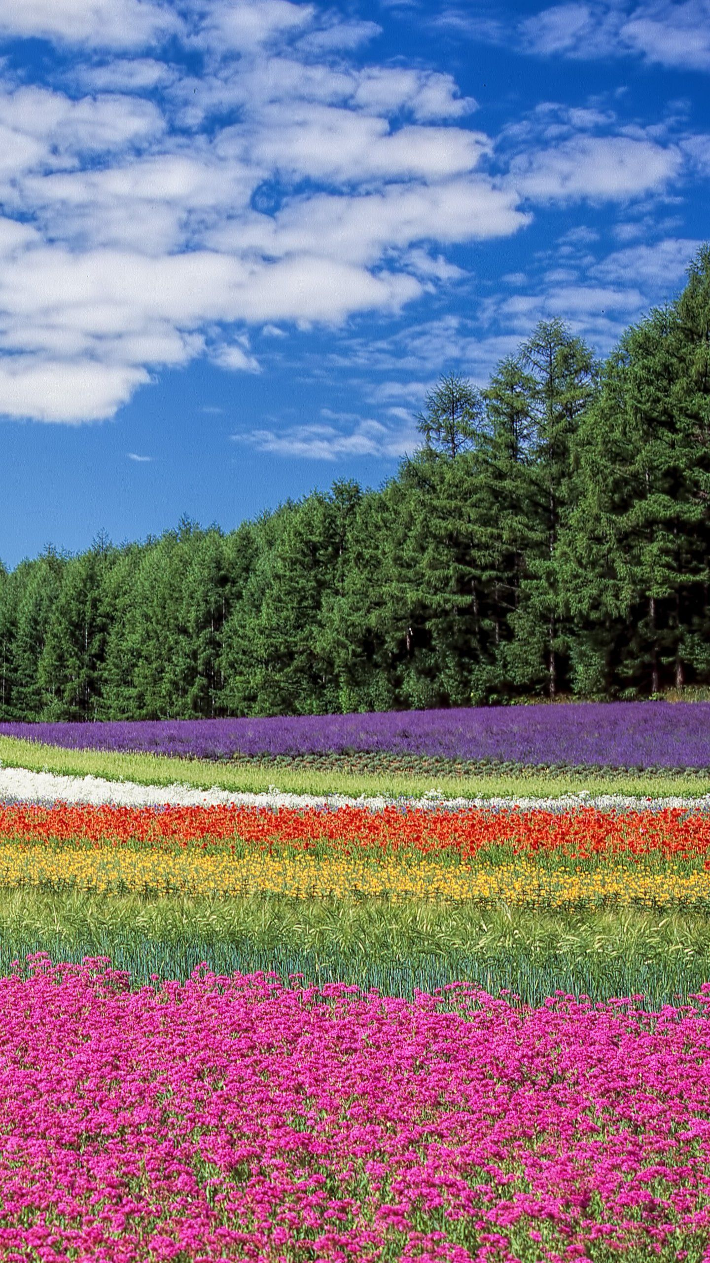 Field Of Flowers Wallpaper Iphone Android Desktop Backgrounds Photography Inspiration Nature Nature Iphone Wallpaper Flower Beds Diy
