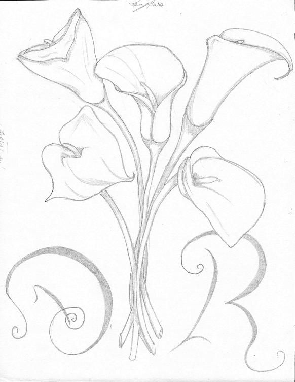 Calla Lilies By Chibibookworm221 D4g42pz Jpg 582 752 Lilies Drawing Calla Lily Tattoos Flower Drawing
