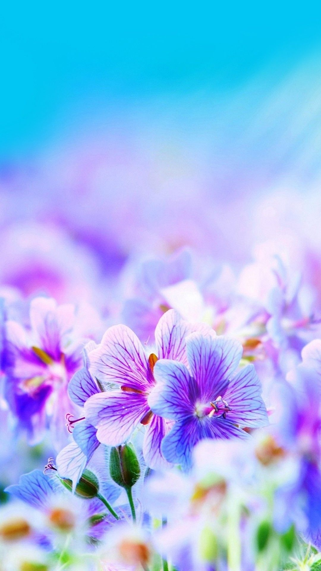 colorful floral print iPhone wallpaper iPhone Wallpaper