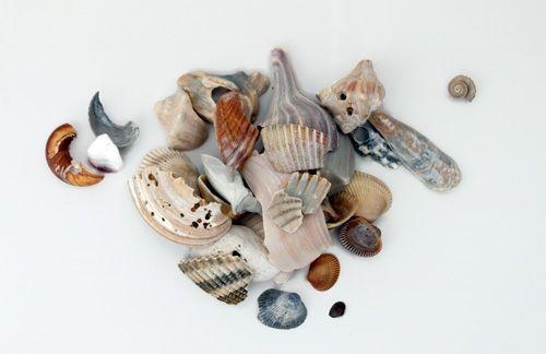 Shell Study: Print 8 by Kelly Lynn Jones $35