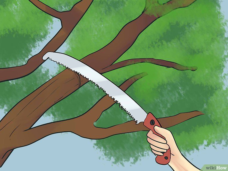 how to prune crepe myrtle bushes