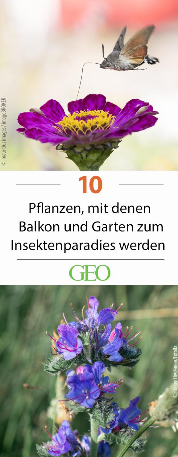 Zehn Pflanzen, mit denen Balkon und Garten zum Insektenparadies werden