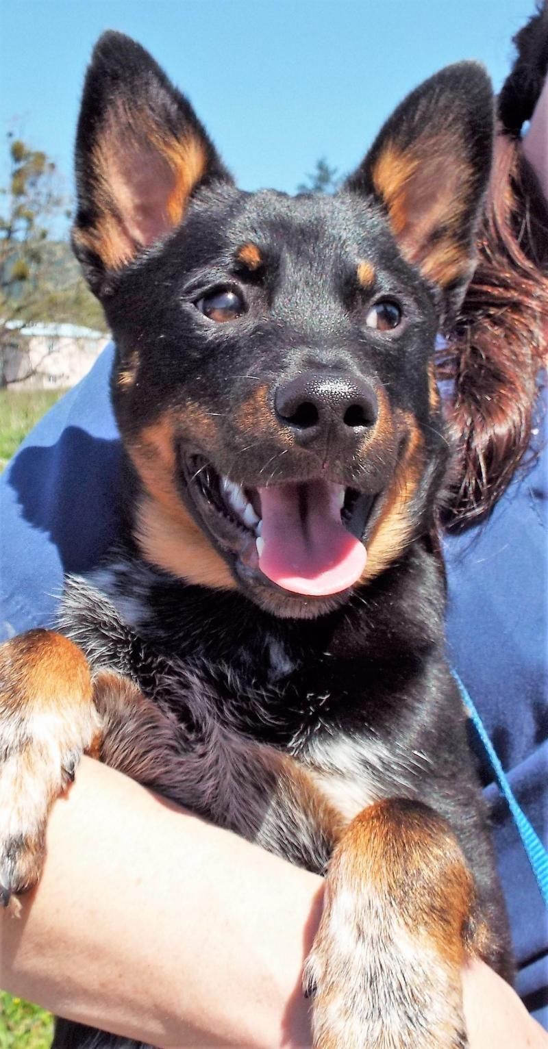 Adopt Augie on Petfinder