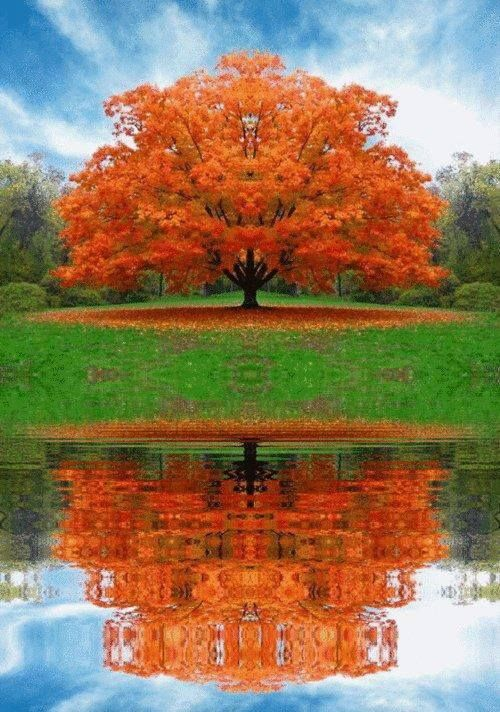 Tree fall orange reflection #falltrees
