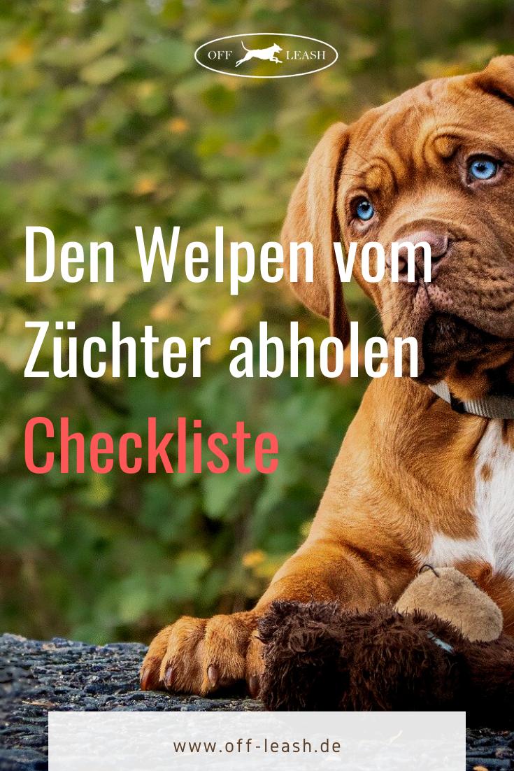 Den Welpen Abholen Checkliste In 2020 Welpen Hundehaltung