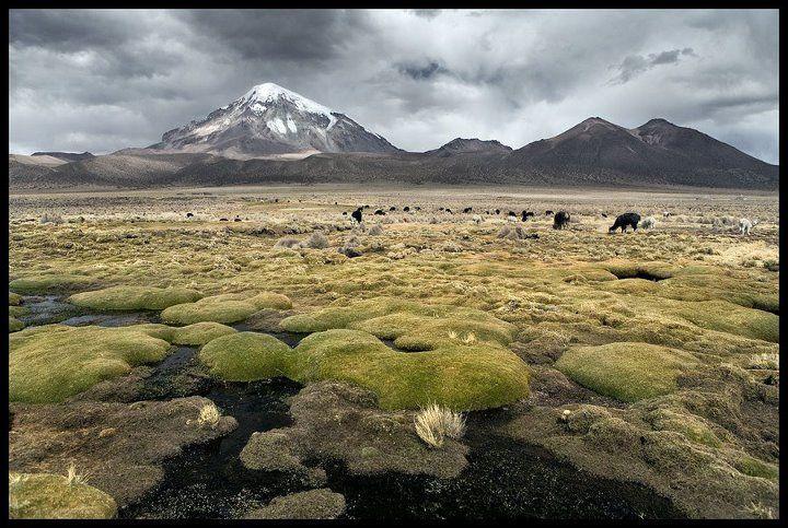 #mongolia
