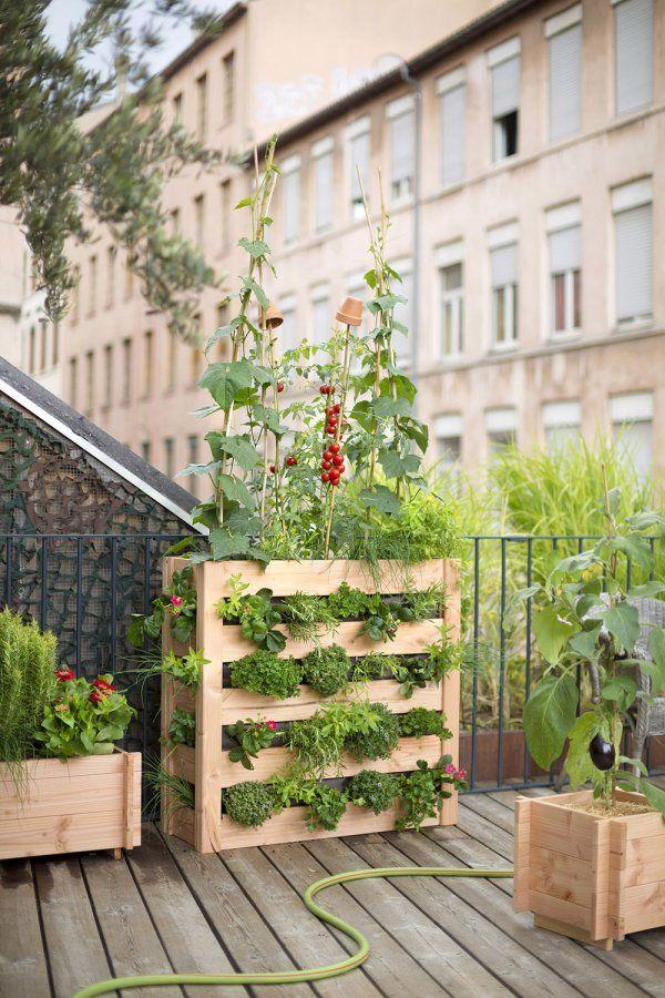 Potager pour un balcon  notre sélection Gardens and Plants - creer un plan de maison