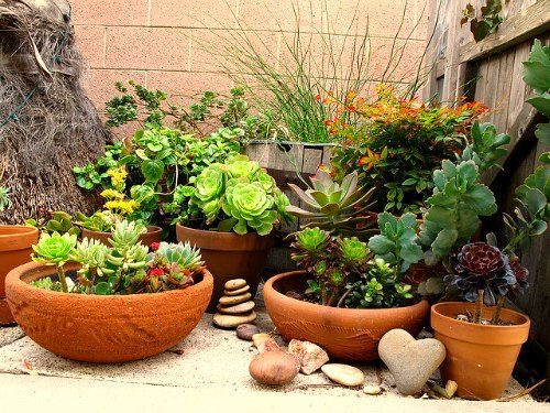 Which Fertilizer Is Best For Container Gardening? How Often Should You  Fertilize? Can You