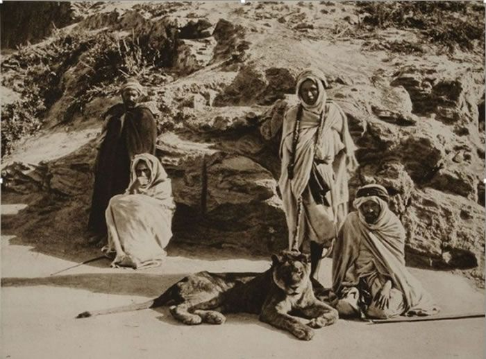 Les 3 Grands Fauves Disparus D Algerie Mundo Antiguo Fotos Mundo