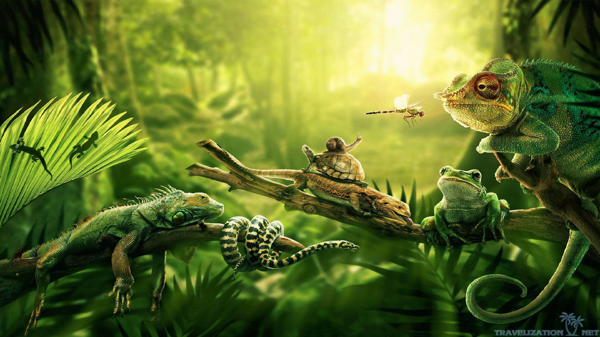Amazon Rainforest Wallpaper Full HD bGn Jungla