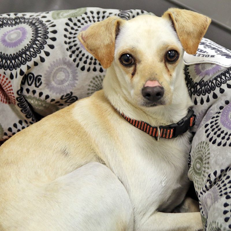 Chewy SPCA of Texas (Dallas) (With images) Shelter