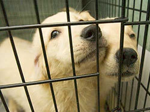 Animal Lovers Seek No Kill Policy Pet Store Animals Animal Stories