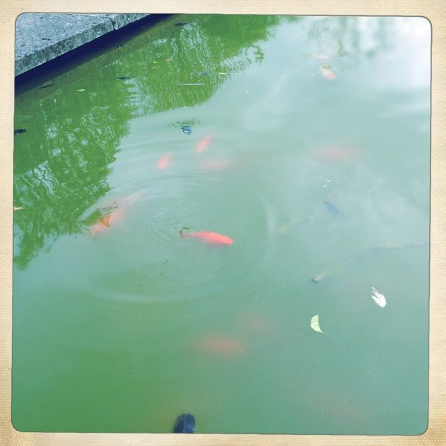 So many fish in the pond