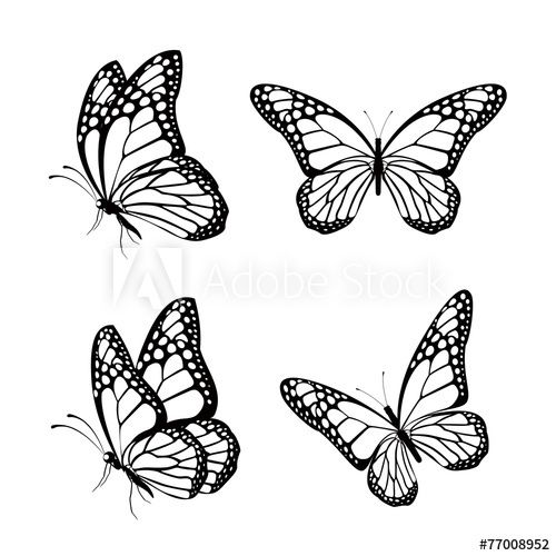 Set Of Realistic Colorful Butterflies Isolated For Spring In 2020 Butterfly Tattoos For Women Silhouette Butterfly Tattoos For Women Half Sleeve