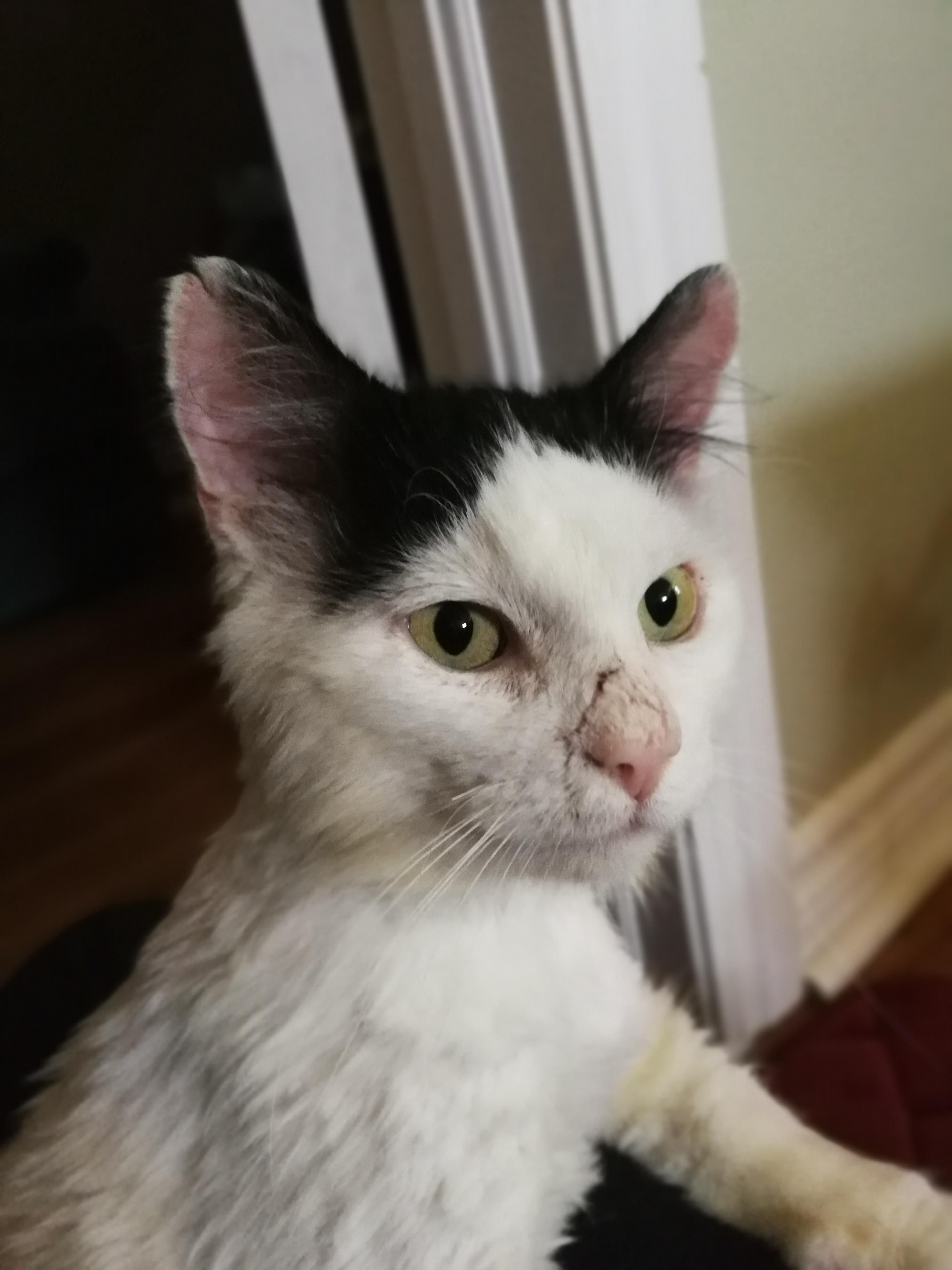 Reddit Meet Scar Scar Enjoys Catnip Being Inside And Food Http Bit Ly 2xgjklw Cute Cats And Dogs Fluffy Animals Cute Cats