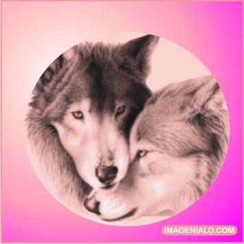 Lobos Anamorados Imagen Perfil Watts App Mi Lobo Pinterest